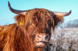 beef-1101536_1280